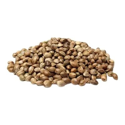 cannabis seeds white background