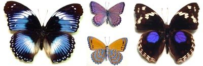 Africa And Madagascar Butterfly And Moth Insect Displays