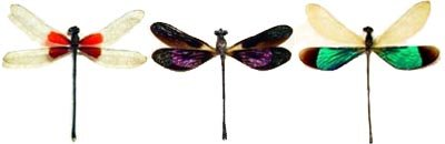 Real Framed Dragonflies & Dameslflies From Around The World