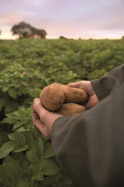 farmer-potatoes-in-hand-14