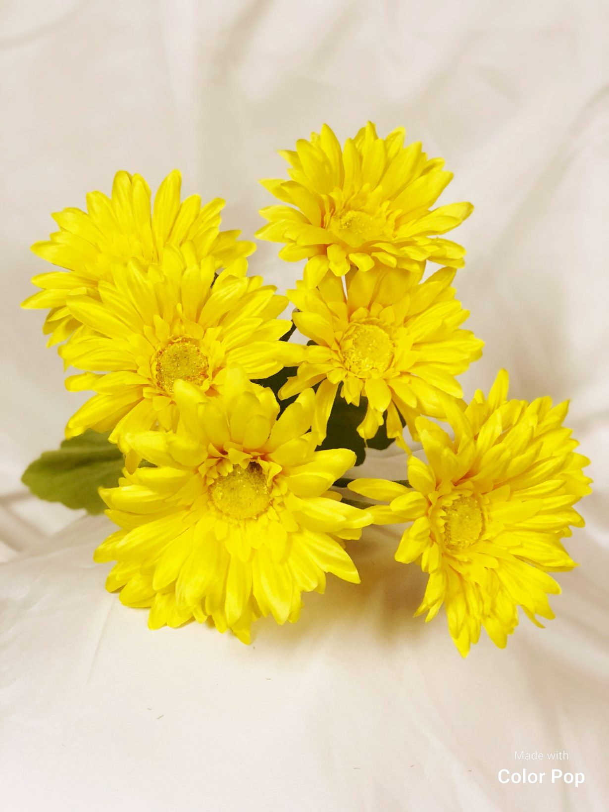 Yellow Gerbera Daisy Bush Wholesale South