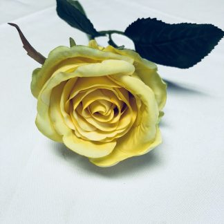 yellow rose bud stem