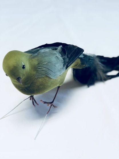 green feather bird