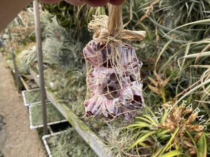 Barnacle with abaca net