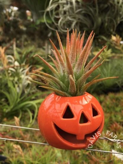 Halloween orange pumpkin ceramic