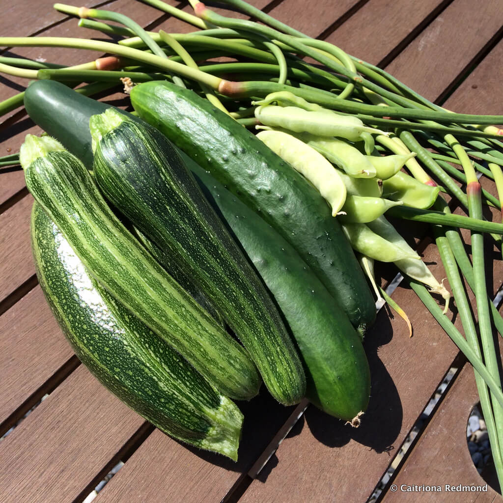 Allotment Harvest June 2015 - Caitriona Redmond