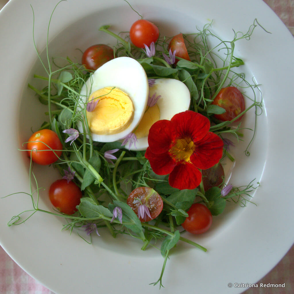Pea Shoot Salad And Buttermilk Dressing