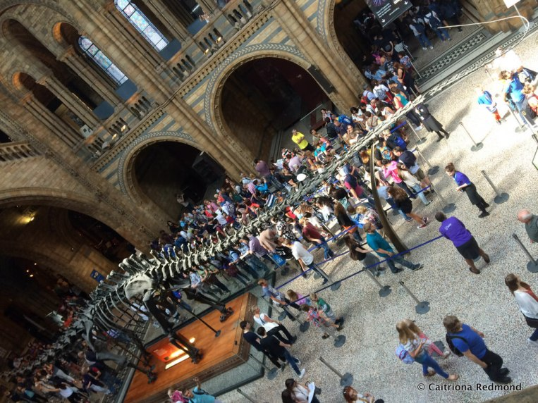 View of Dinosaur in Natural History Museum