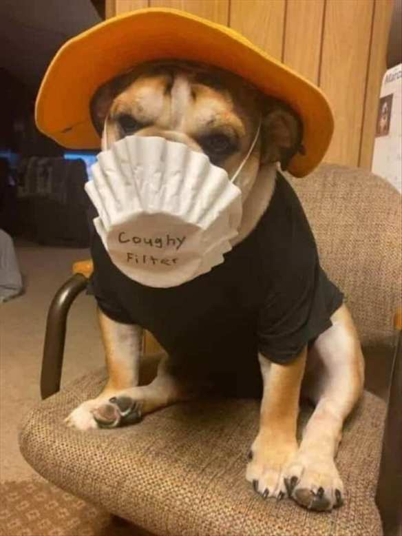 Bulldog with a yellow hat and a coffee filter around it's face.