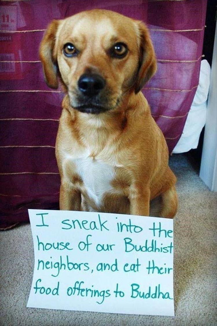 Dog getting shamed for stealing food.