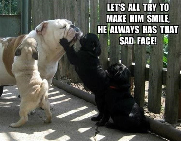 Bulldog with 3 pug puppies.