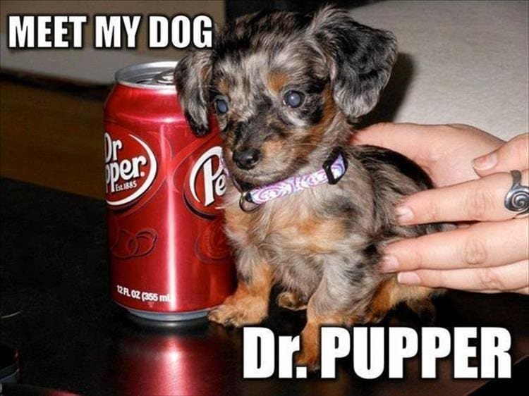 Life with dogs. Tiny puppy next to a can of Dr. Pepper.