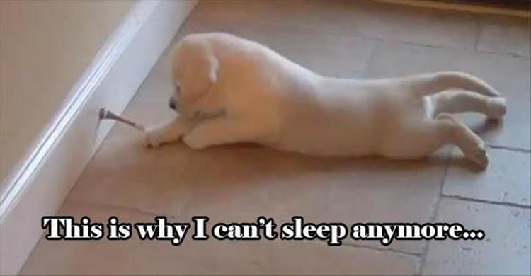 Life with dogs. Puppy playing a door stopper.
