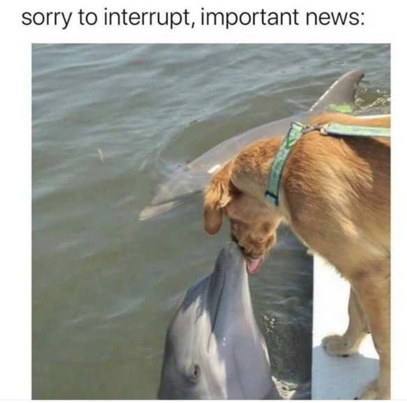 Dog kissing a dolphin from a dock. funny bone