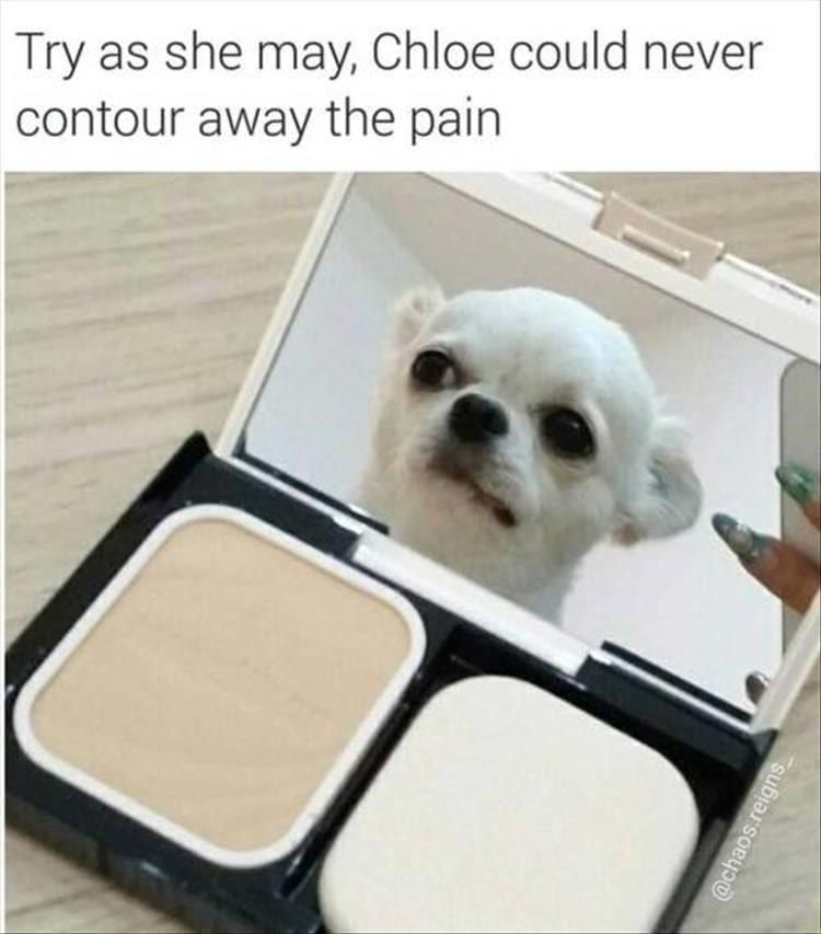 Chihuahua looking into a makeup compact mirror. funny bone