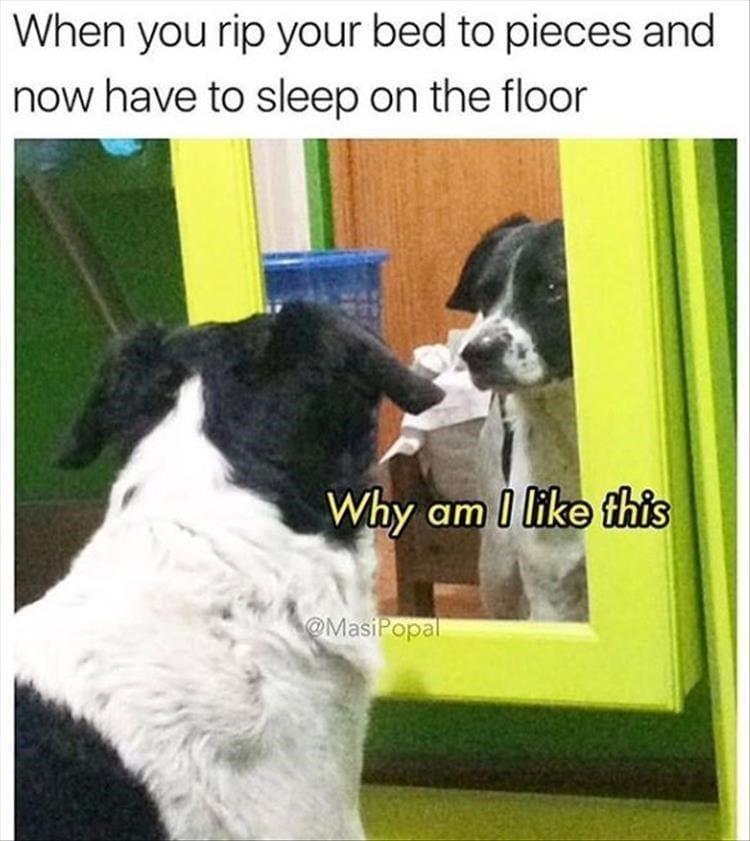 Dog looking into mirror.