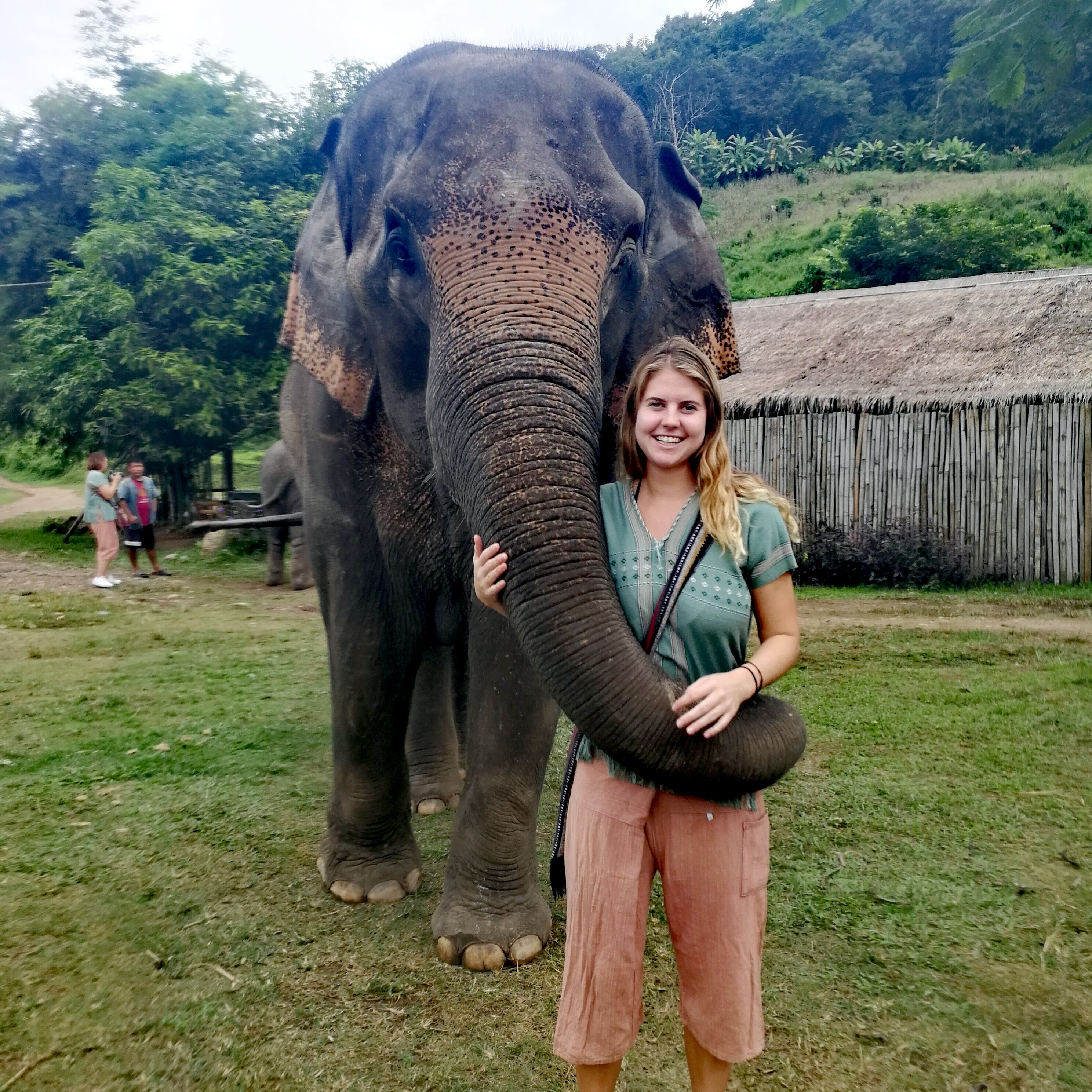 Visiting an Elephant Sanctuary in Chiang Mai, Elephants in Thailand, Thailand Elephants