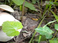At the park, Barney finds frogs in the grass (can you find the frog? Barney can! -- click the pic to enlarge)