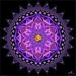 purplecircleOM