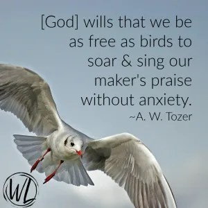 bird soaring with quote on freedom