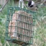 Homemade Wild Bird Suet
