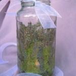DIY Fairy Lanterns