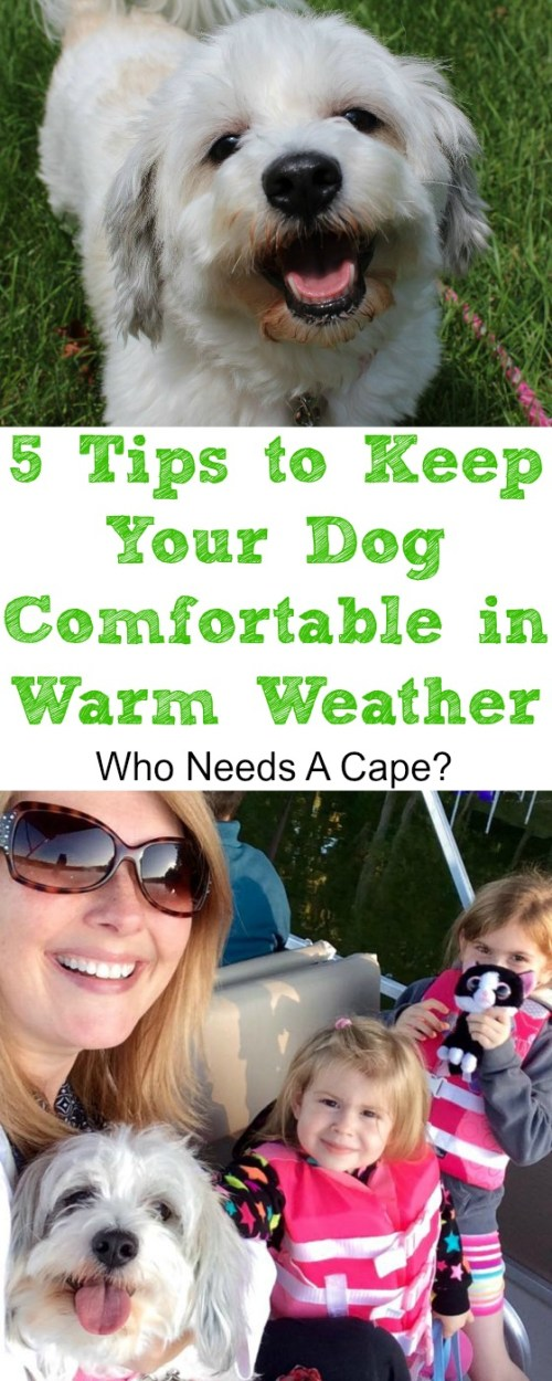 We cannot forget our dogs comfort during the summer Here's 5 Tips to Keep Your Dog Comfortable in Warm Weather. Easy suggestions that will keep everyone happy.