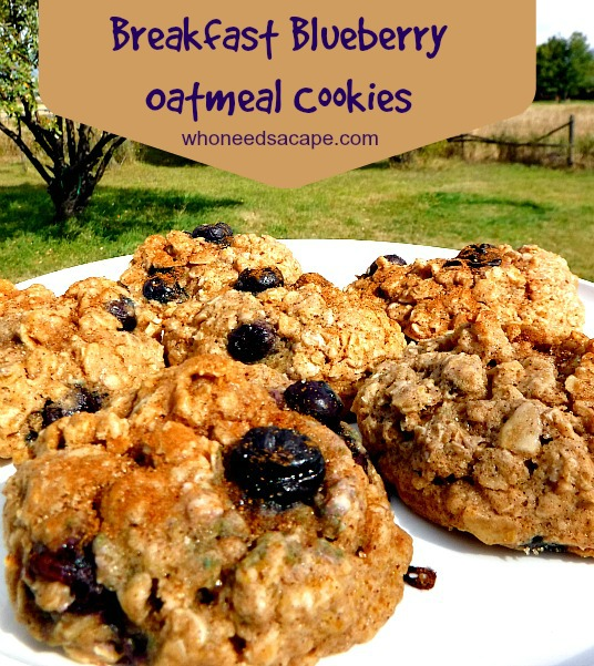 Breakfast Blueberry Oatmeal Cookies
