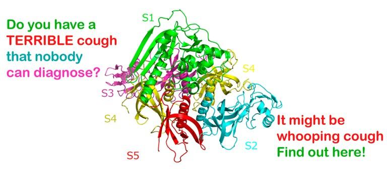 Afbeelding van cartoon en tekst pertussis-toxinestructuur waarin wordt gevraagd of de kijker een vreselijke hoest heeft omdat het kinkhoest kan zijn