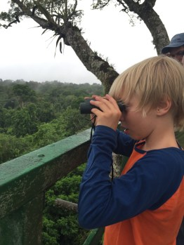 Looking for Howler monkeys from the observation tower.
