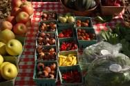 Eco-Friendly Gardening, 5 Ideas: