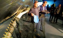 Marine Debris Found In Dead Sperm Whales
