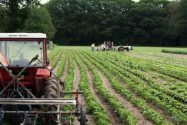 Organic Farms, Getting Things off the Ground
