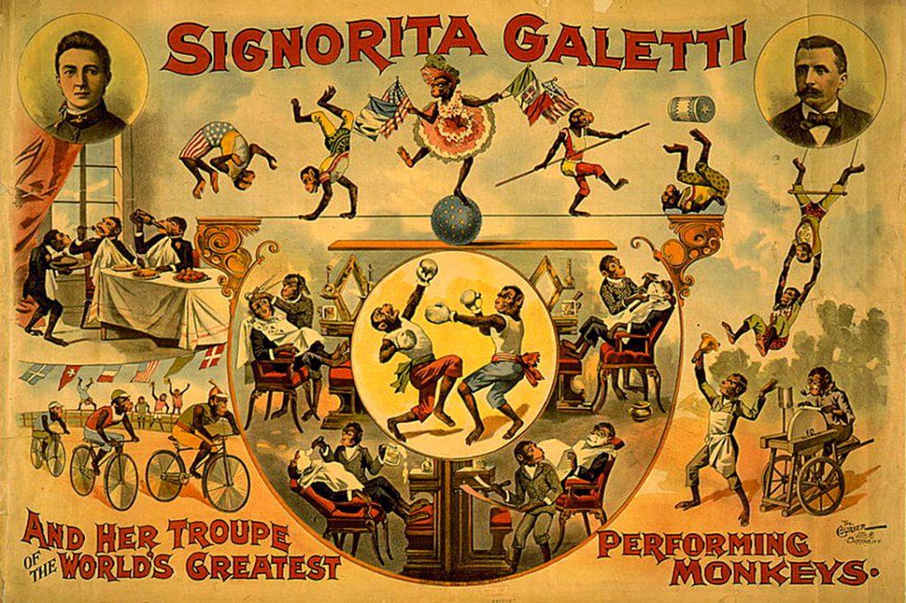 world's greatest performing monkeys