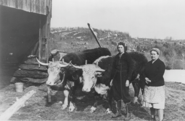 Dot and Eurma Tower with a pair of oxen trained by Dot for gathering sap.