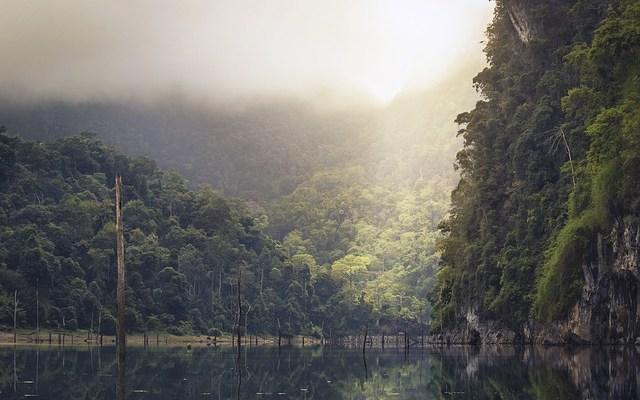 16e2dc339cd81b10_640_rain-forest
