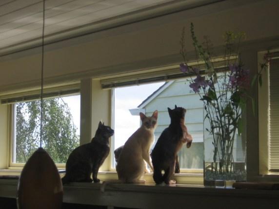 cats in window 1