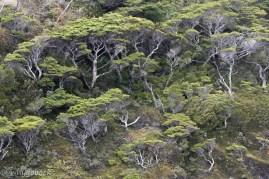 Patagońskie Fjordy