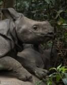 Park Narodowy Chitwan
