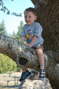 Jackson tree-climbing @ Peterson Park
