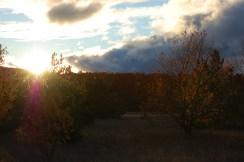Dark & Sunny Sky