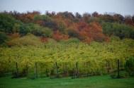 45_North_Vineyards_Fall