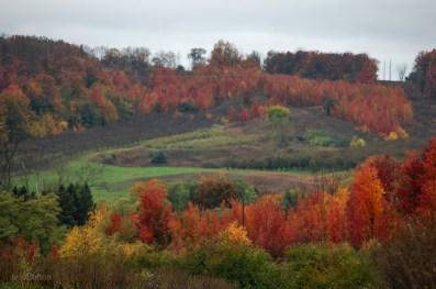 Fall_Hillside_Suttons_Bay