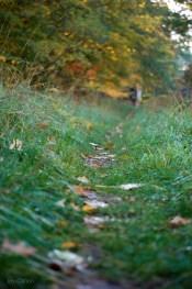 Fall_Trail