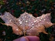Frozen_Dew_Leaf