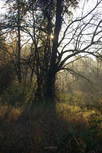 Tree_Shadow_Fog