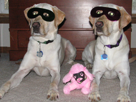 Masked Dogs
