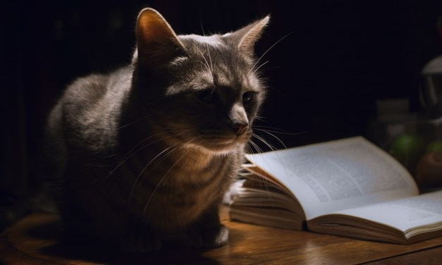 Cat Mystery Books to Curl Up With