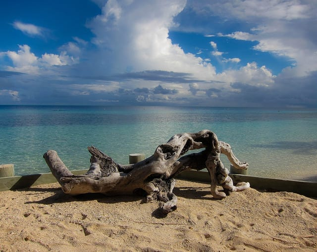Driftwood on the Beach - Tips for Blogging Success