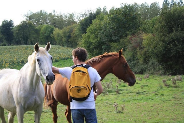 Working With Horses Trough Helpx - Which Work Exchange Should You Choose?